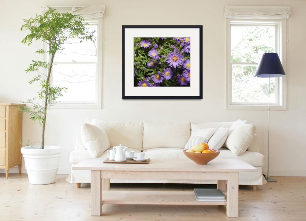 """""""asters&quot  (2010) by nathangriffith"""