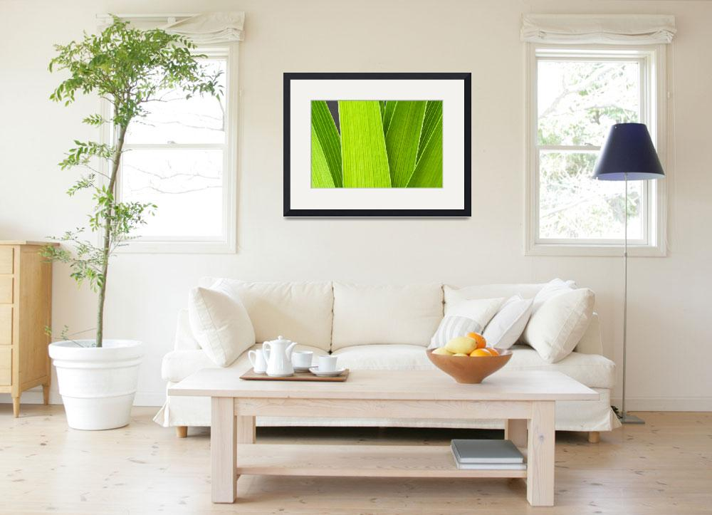 """""""Daylily Leaves&quot  (2008) by MichaelSwanson"""