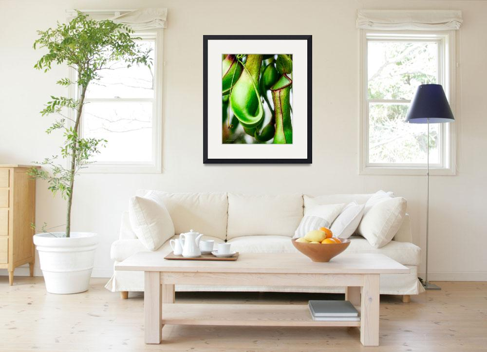 """""""Tropical Pitcher Plant Nepenthes&quot  (2010) by johncorney"""