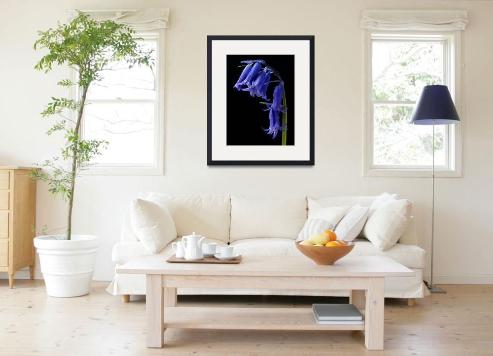 """""""Bluebell&quot  (2009) by roger"""