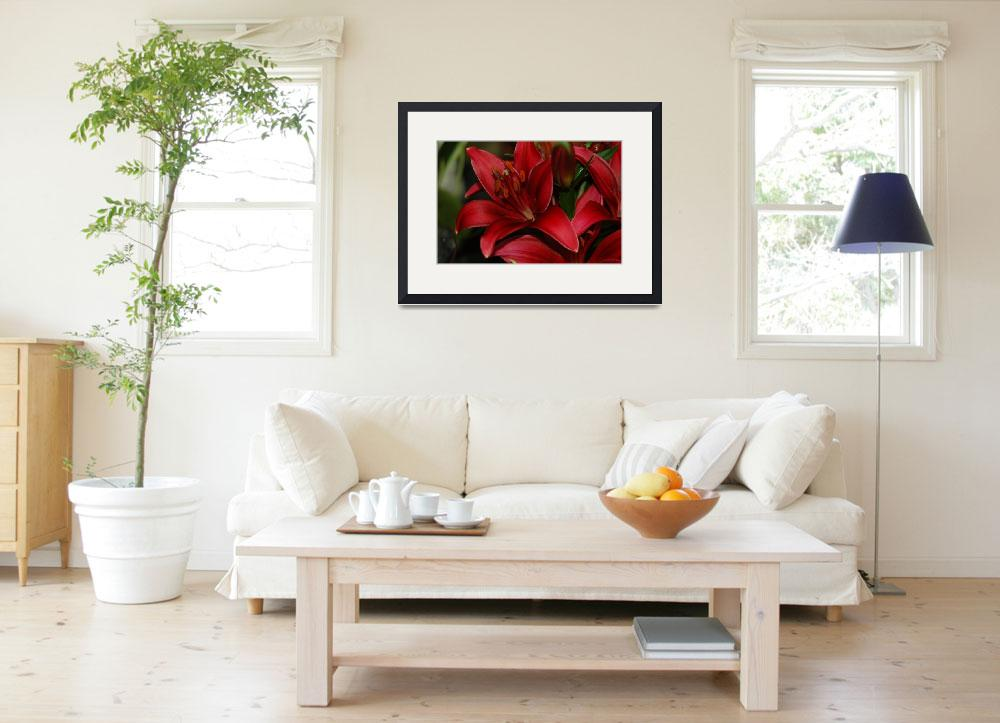 """""""Red Lilly&quot  (2008) by RickTeare"""