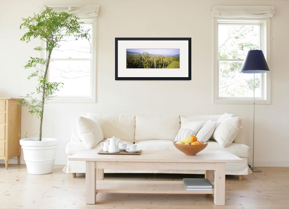 """""""Apple trees in an orchard&quot  by Panoramic_Images"""