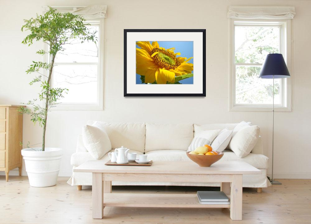 """SUN FLOWERS Giclee Art Prints Sunflower Baslee&quot  (2009) by BasleeTroutman"