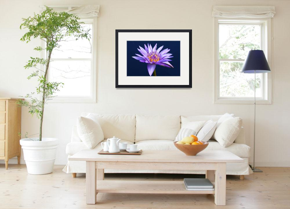 """""""Lavender Water Lily&quot  (2009) by FordLou"""
