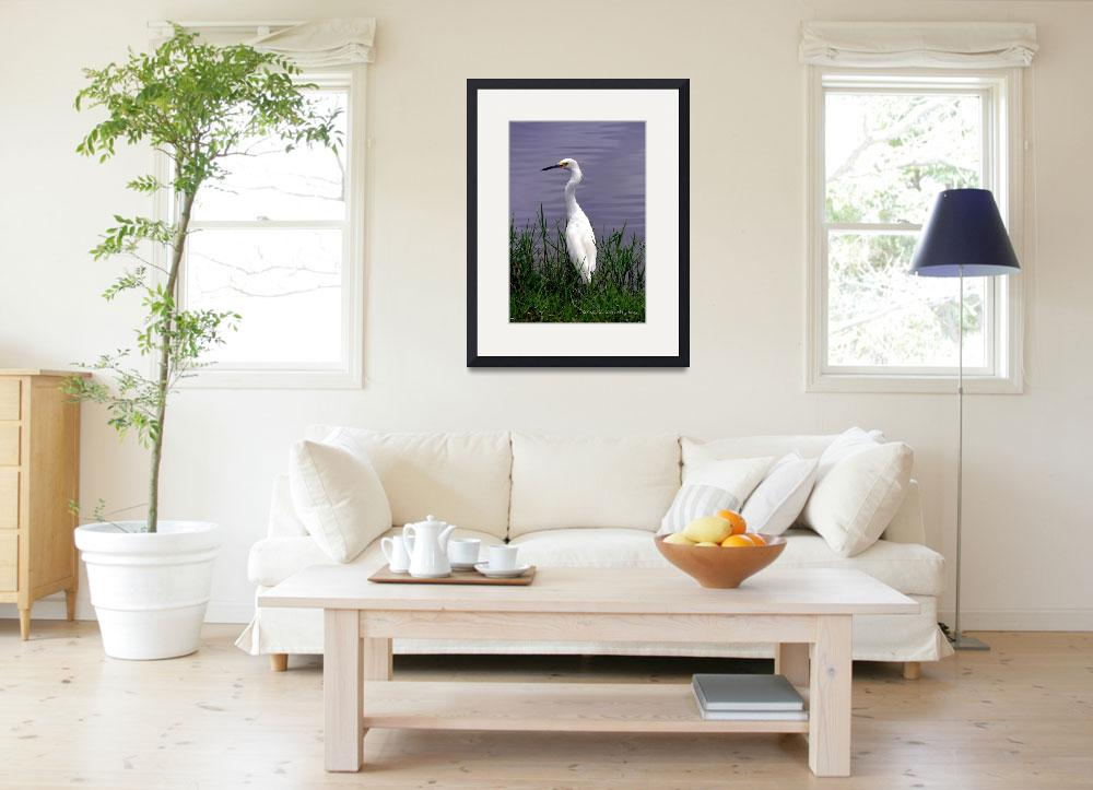 """Egret At Reed Canal Park&quot  (2009) by ChrisCrowley"
