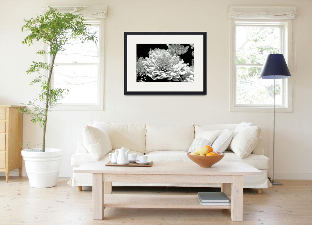 """""""Chrysanthemum in Black and White&quot  (2013) by MotherNature1"""