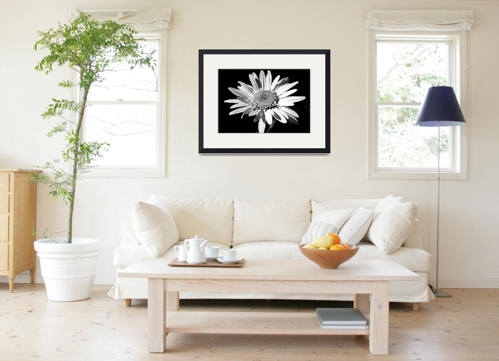 """""""White Daisy #3&quot  (2009) by psmphotography"""