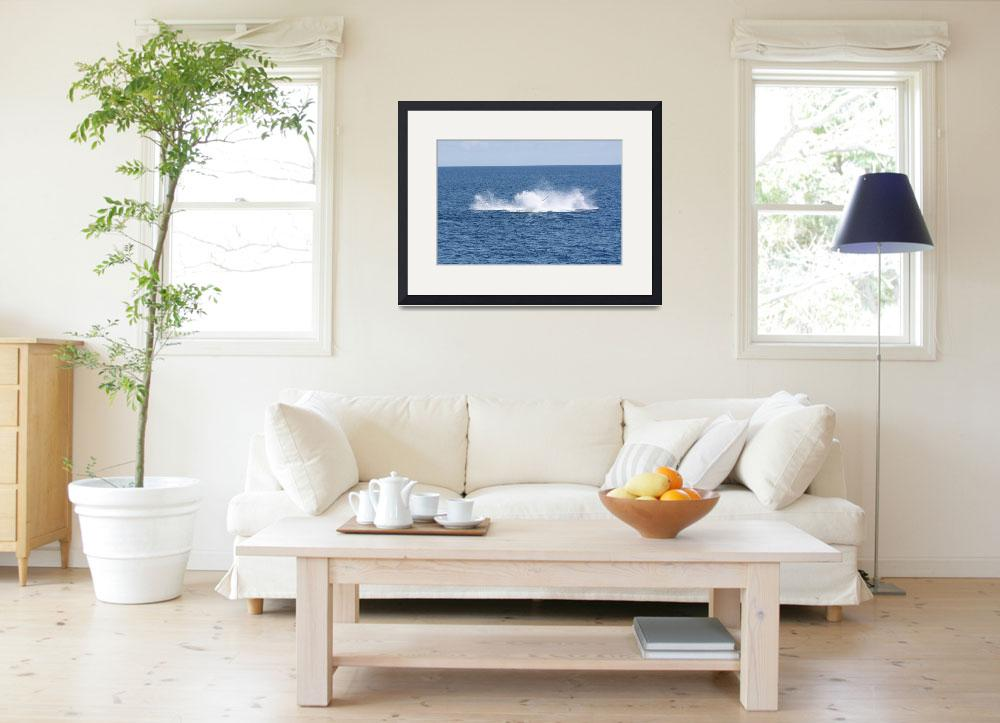 """""""NaP_ Whale Watching191a&quot  by nevilleprosser"""