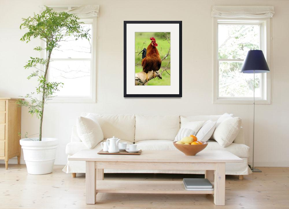 """""""Rooster Perched Like a Songbird...As If!&quot  (2010) by LauraM"""