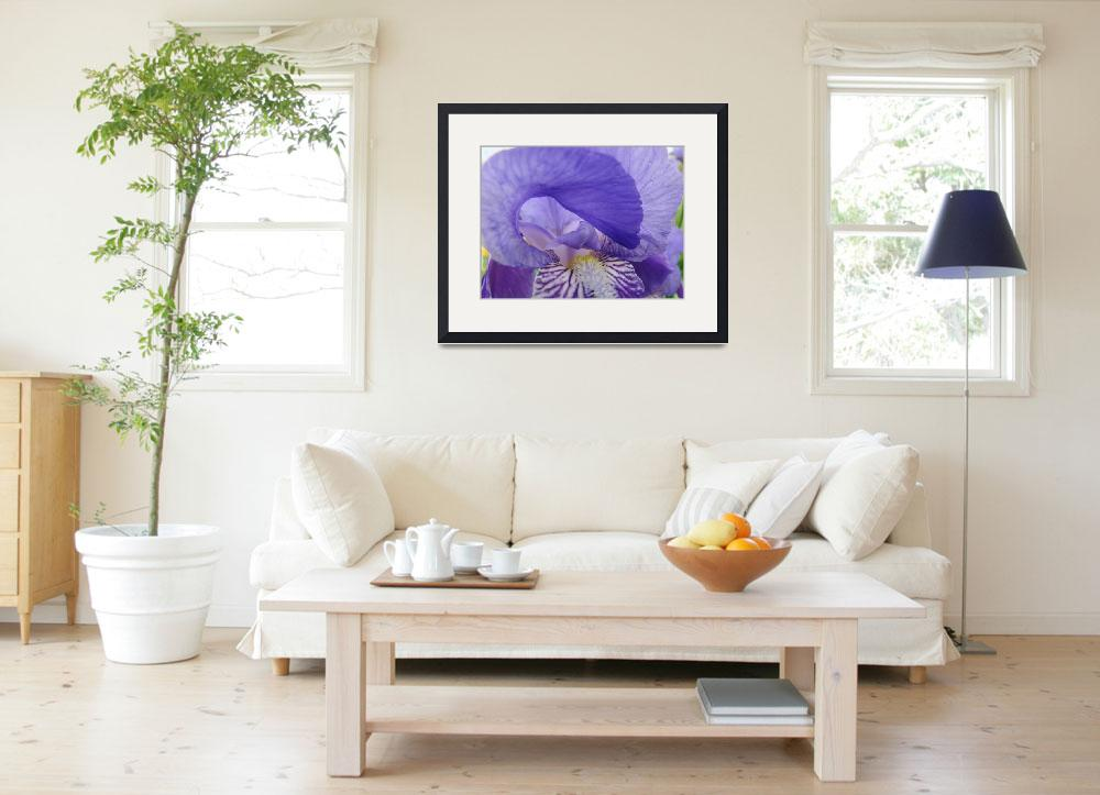 """IRIS FLOWER Art Prints Purple Lavender Irises&quot  (2009) by BasleeTroutman"