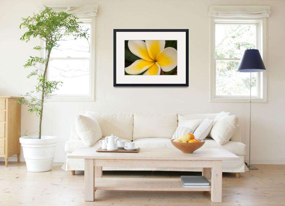 """""""Plumeria Closeup-1790&quot  (2004) by AmbientCreations"""