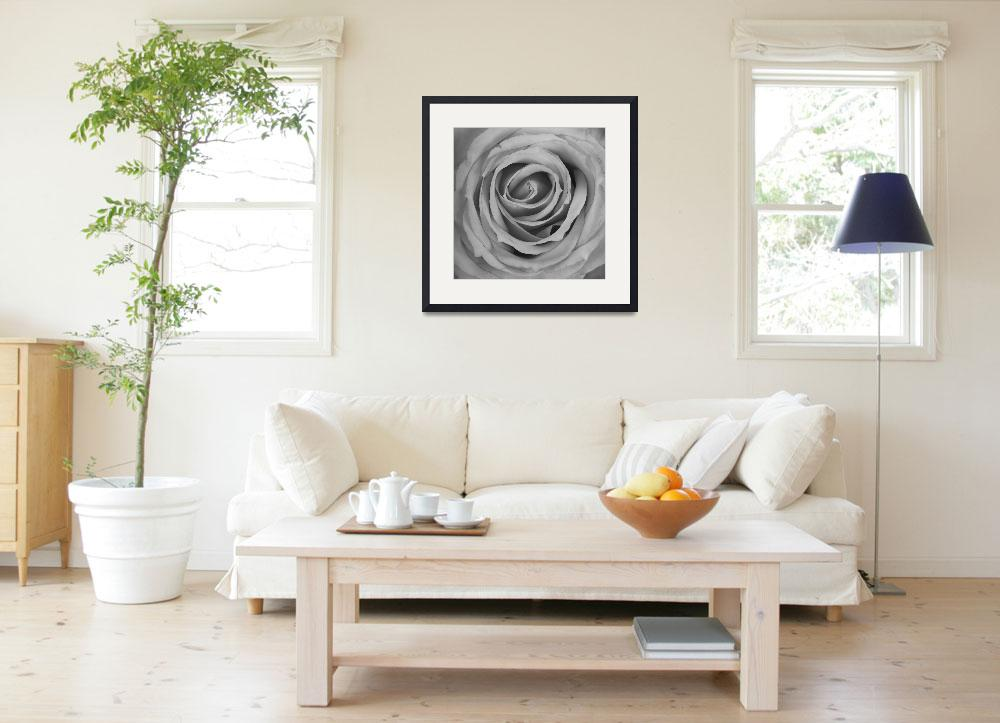 """""""Black and White Spiral Rose Petals&quot  (2012) by lightningman"""