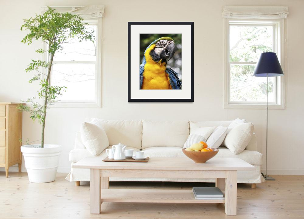 """Blue and Yellow Parrot&quot  (2006) by bhouse"