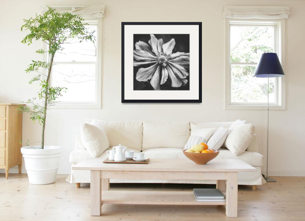 """Anemone Photographic Art in Black and White&quot  (2015) by NatalieKinnear"