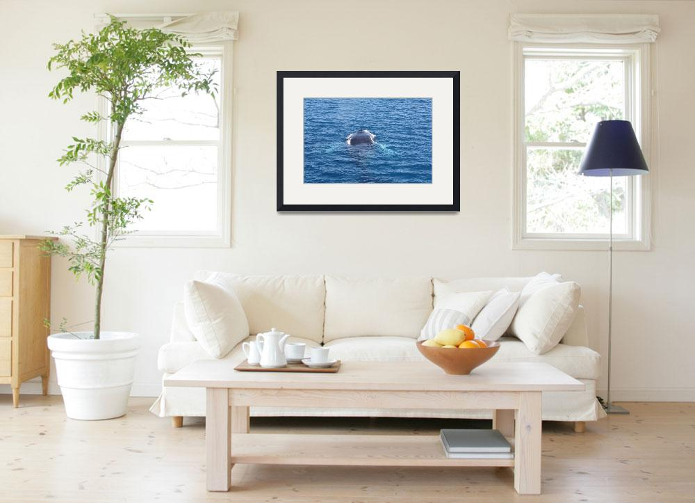 """""""NaP_ Whale Watching061&quot  by nevilleprosser"""