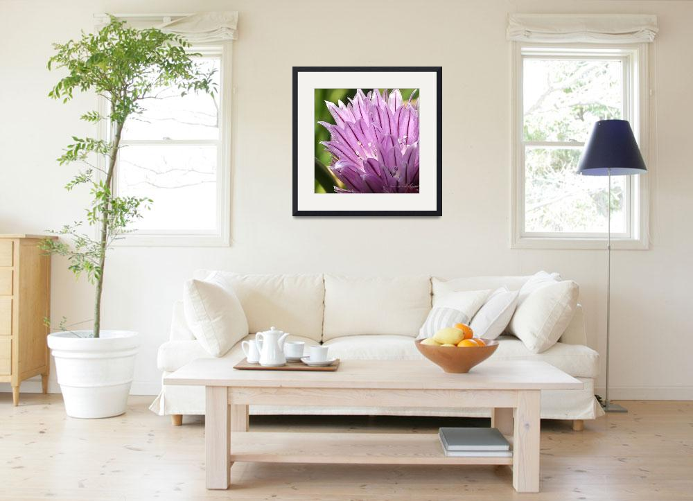 """""""Chive Blossom&quot  (2009) by LeighGrundy"""