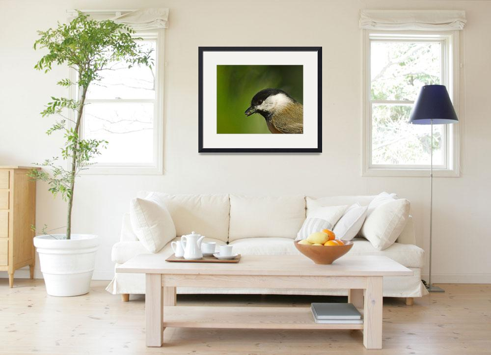 """""""Portrait of a Chickadee&quot  by tricia"""