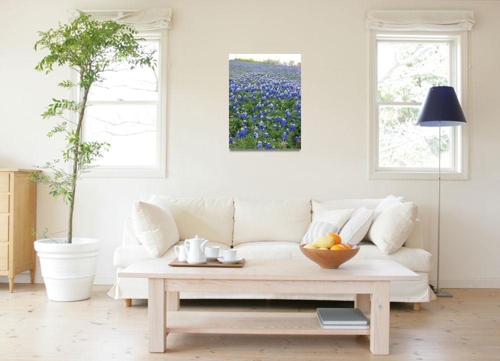 """Texas Blue Bonnets""  (2011) by GlendinePhotography"