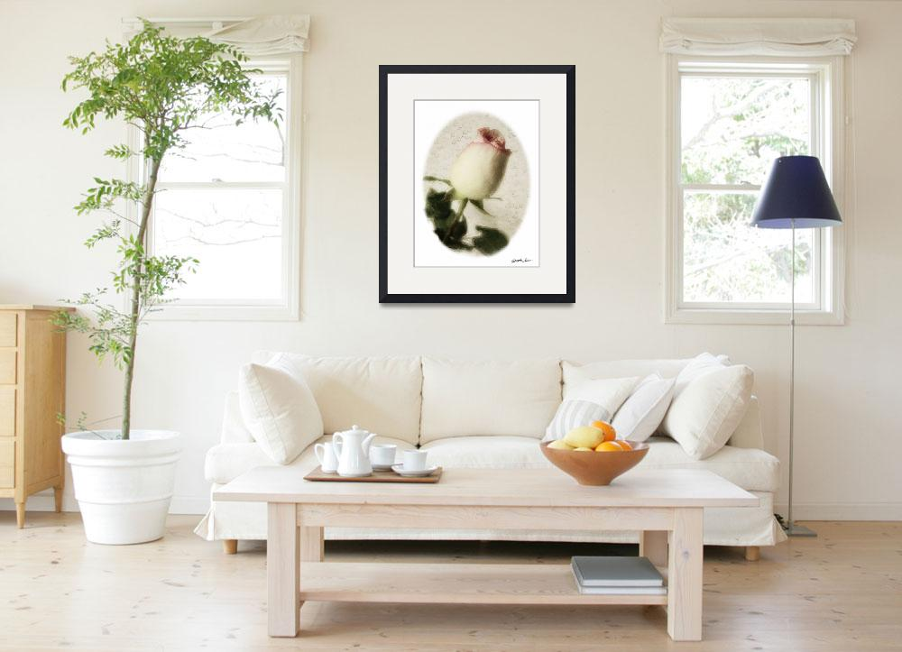 """""""Pink Edged White Roses 3 Vintage&quot  (2010) by ChristopherInMexico"""