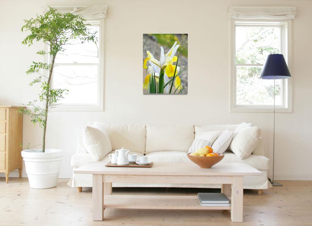 """Irises Yellow IRIS FLOWERS Spring Garden Art""  (2009) by BasleeTroutman"