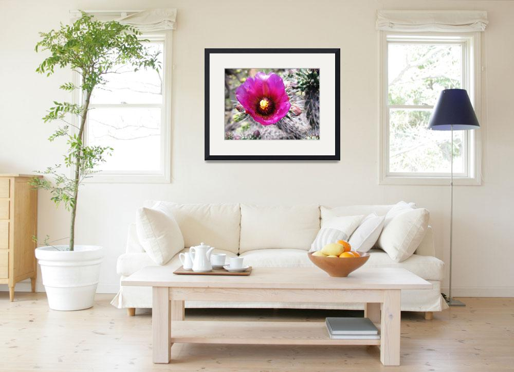 """Pink Cactus Flower in Sedona 2&quot  by MyHartArt"