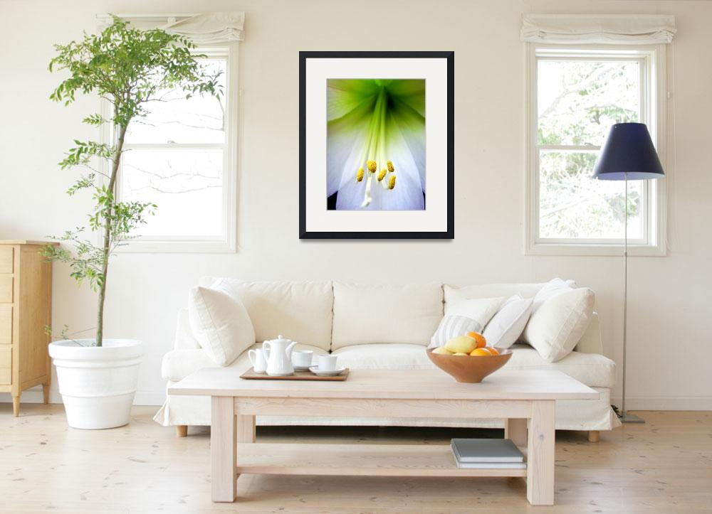 """""""White Lilly&quot  (2008) by bbstudios"""