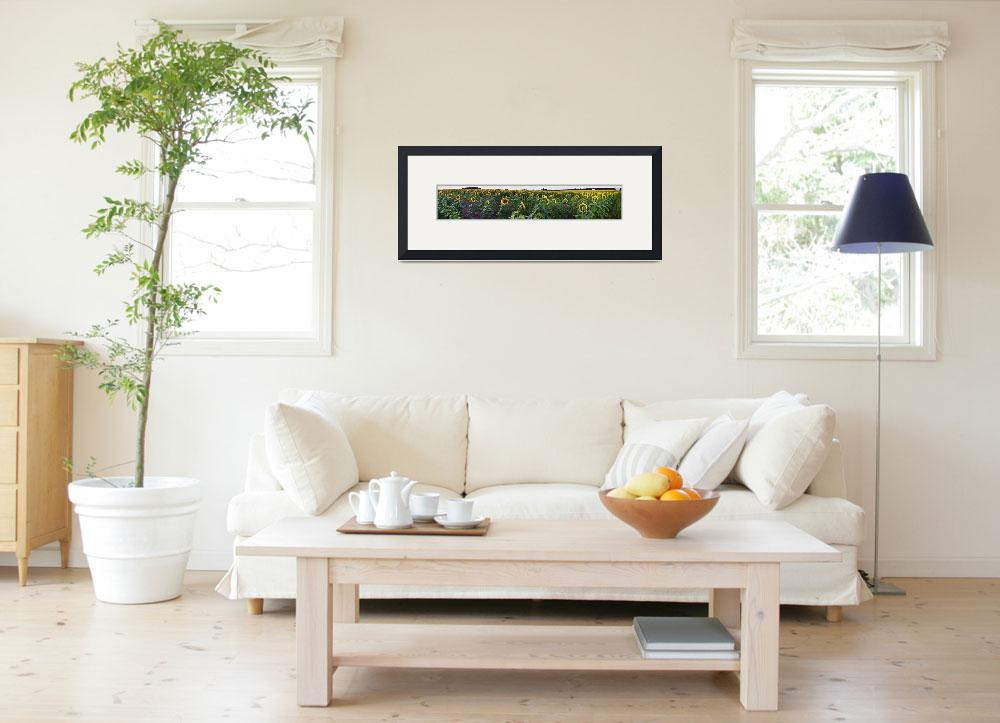 """""""Sunflower Field Panorama&quot  (2009) by jimcrotty"""