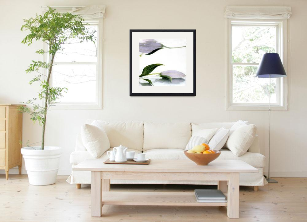 """""""Lilies One Floating&quot  (1991) by paulasuterphoto"""