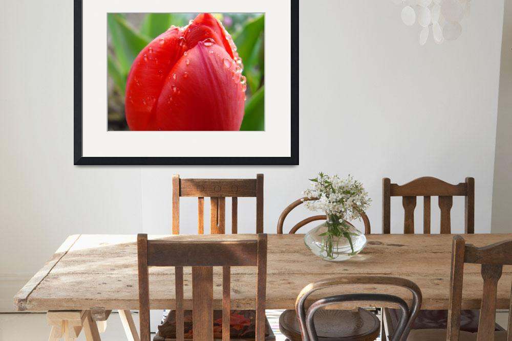 """TULIPS RED TULIP FLOWER 15 Spring Garden Flowers""  (2009) by BasleeTroutman"
