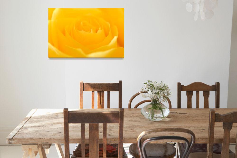 """Yellow Rose&quot  (2008) by dennissmithphotographic"