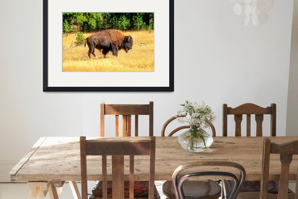 """""""Powerful Male Bison""""  (2000) by JoaoPonces"""