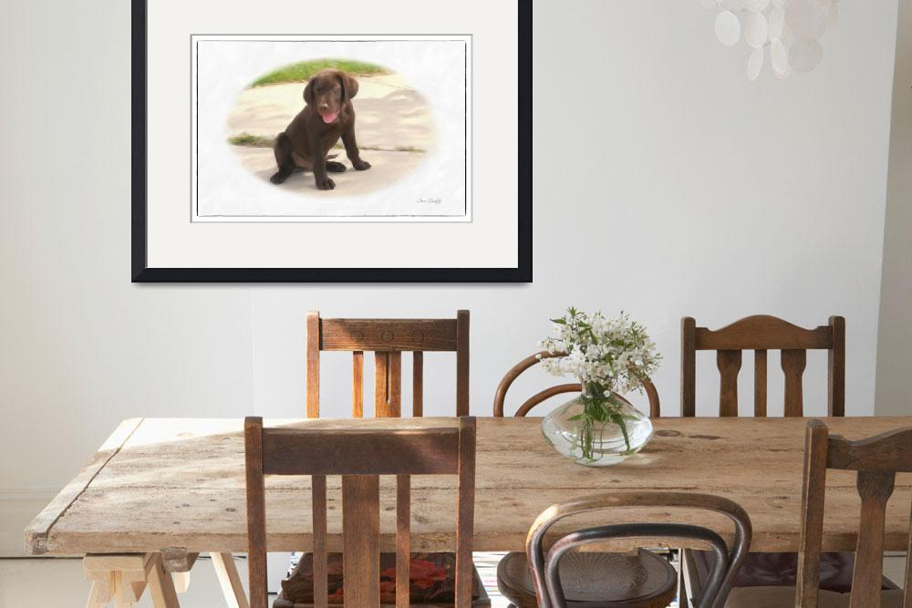 """""""CHOCOLATE LAB PUPPY""""  (2012) by shaynaphotography"""