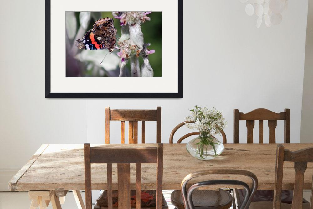 """""""Red Admiral Butterfly on Lambs Ear Plant 2015&quot  (2015) by KsWorldArt"""