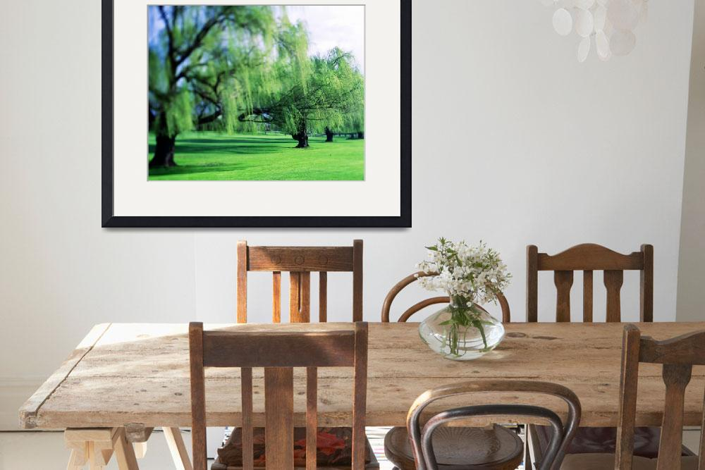 """""""Willow Trees&quot  by Panoramic_Images"""