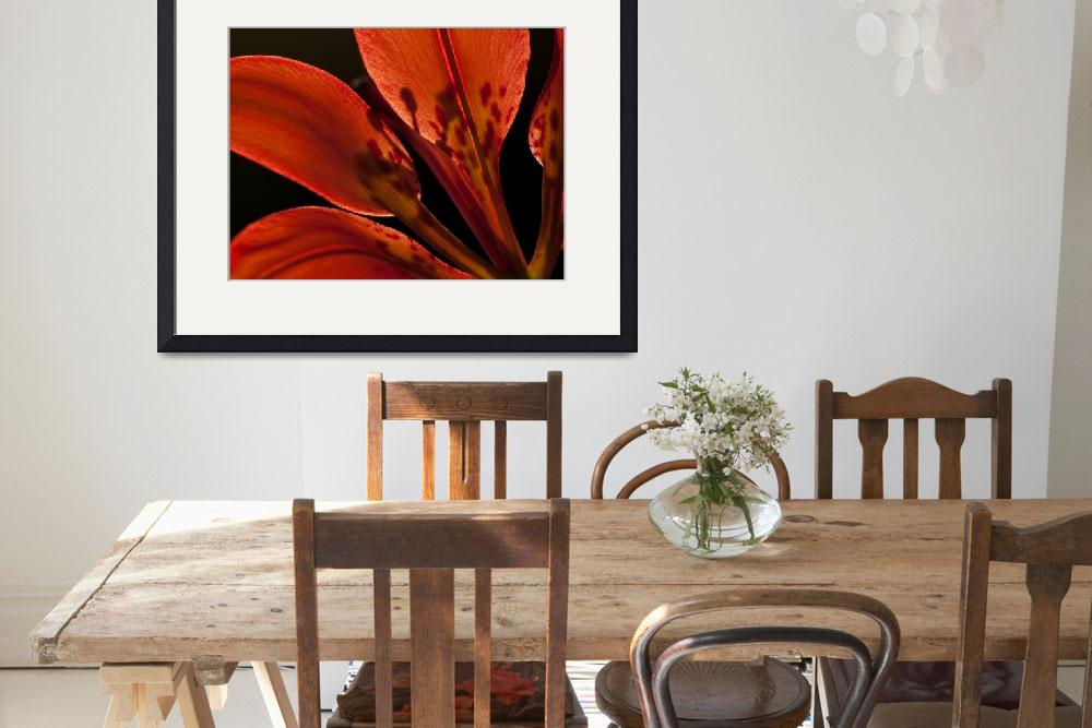"""""""Wood Lily (2)&quot  by nakedeyephotography"""