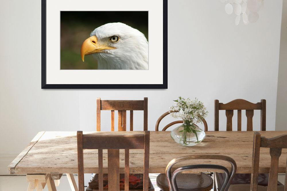 """""""Bald Eagle Watching&quot  (2014) by rhamm"""