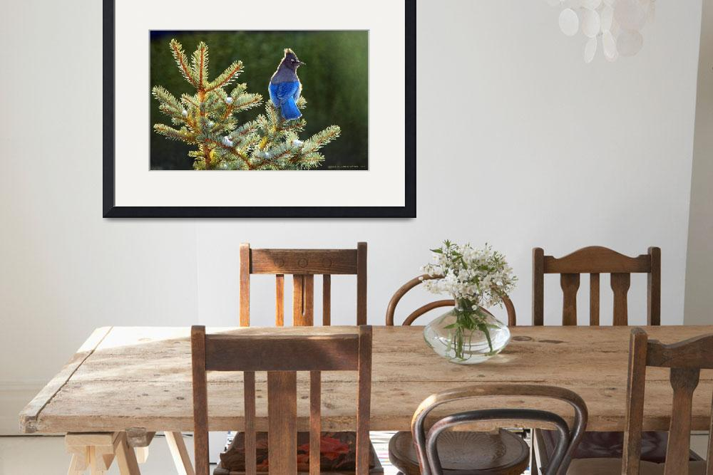 """stellar jay on spruce&quot  (2014) by rchristophervest"