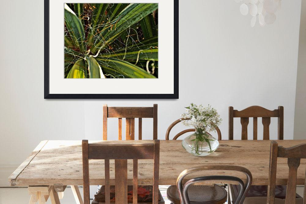 """""""Yucca Plant Chaos&quot  (2010) by bavosiphotoart"""