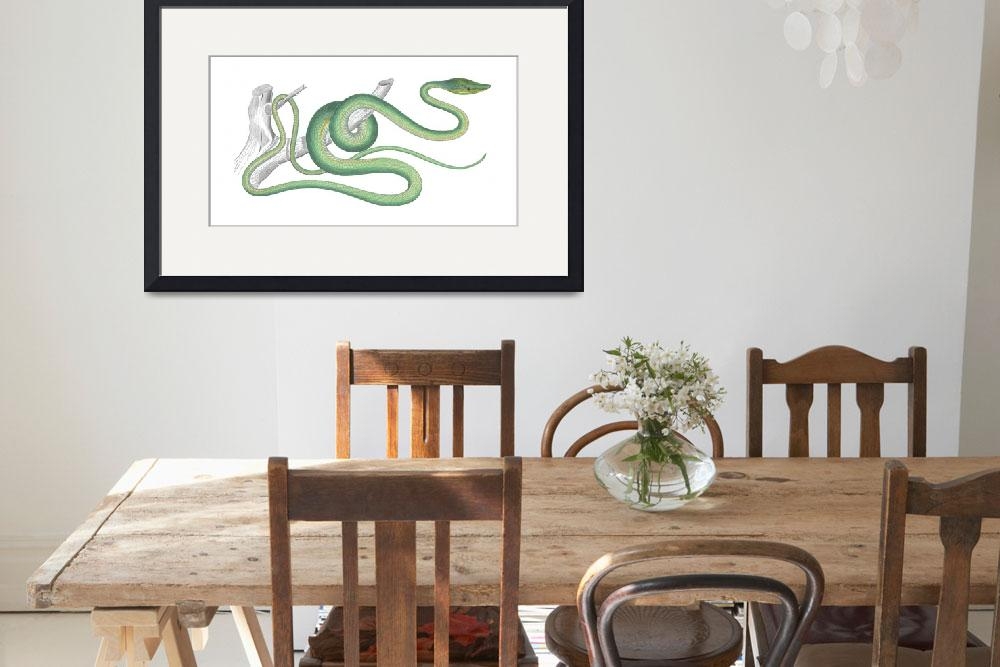 """Green Vine Snake (1843)""  by CoachwhipBooks"