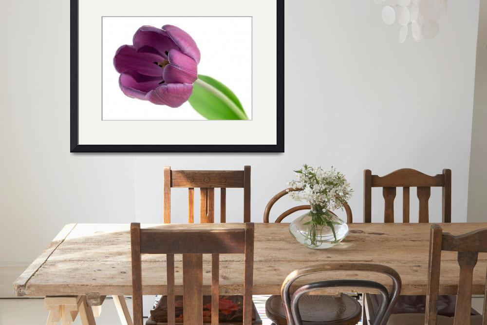 """purple tulips&quot  (2008) by JulieScholz"