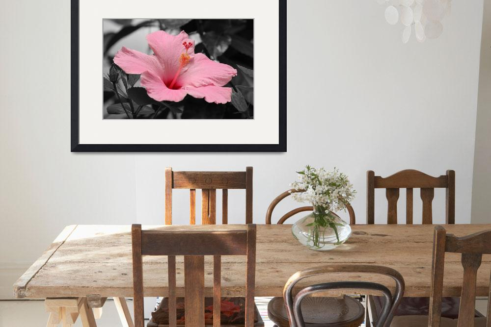 """""""Hibiscus in a Black & White World&quot  (2011) by kenrainwaterphotography"""