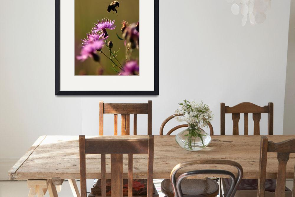 """""""Busy Bee&quot  (2008) by WaynePhotoGuy"""