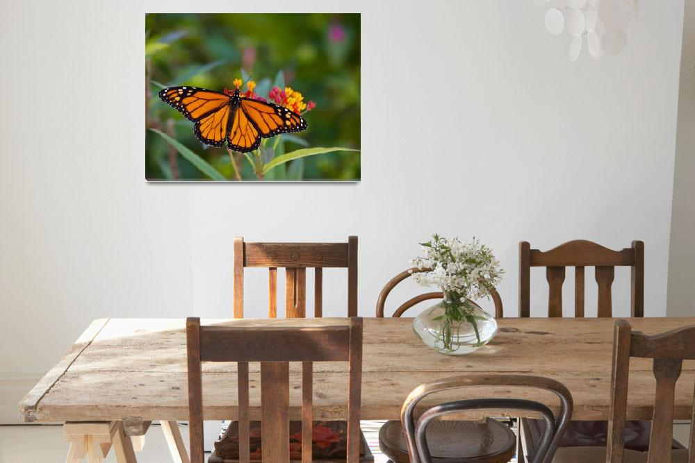"""""""Monarch and Milkweed""""  (2008) by NjordPhotography"""