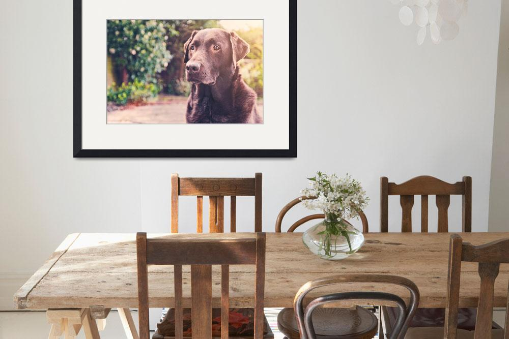 """""""Handsome Chocolate Labrador&quot  (2013) by jmpaget"""
