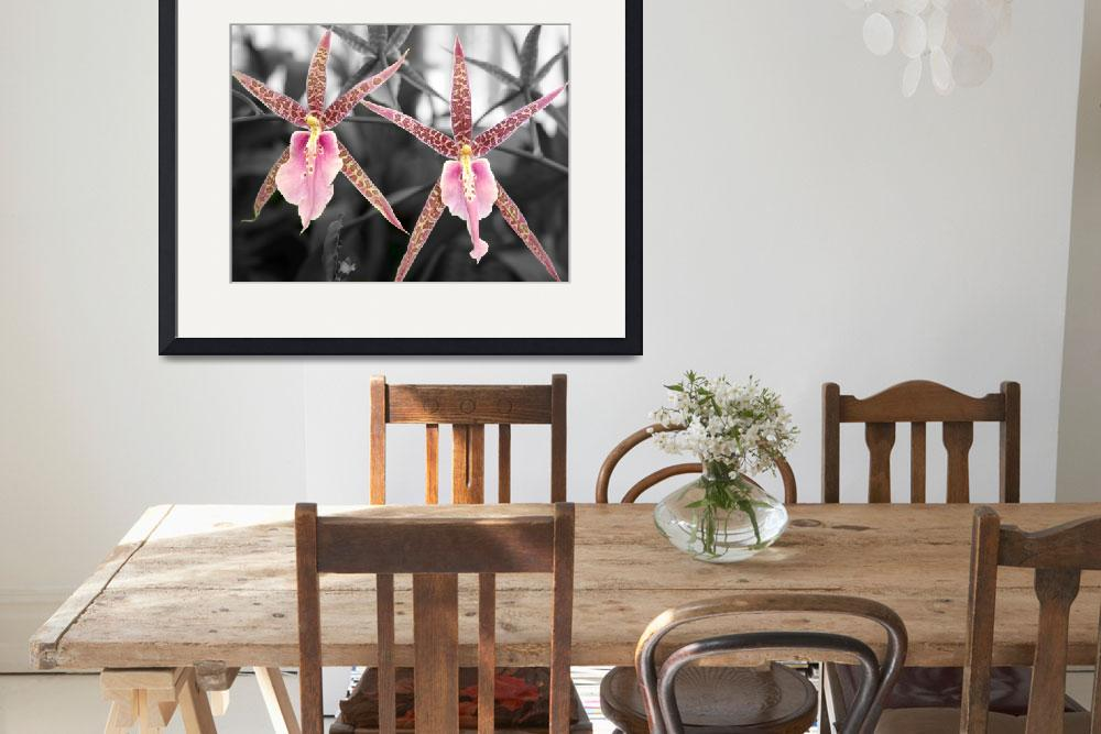 """""""Star Orchid&quot  by ayfoto"""