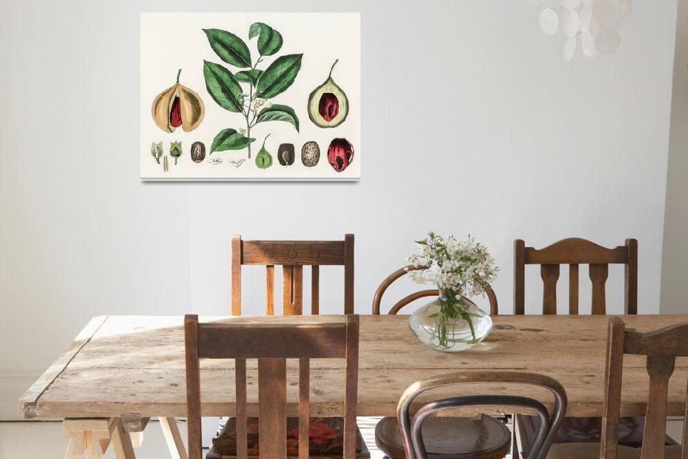 """Vintage Botanical Nutmeg&quot  by FineArtClassics"