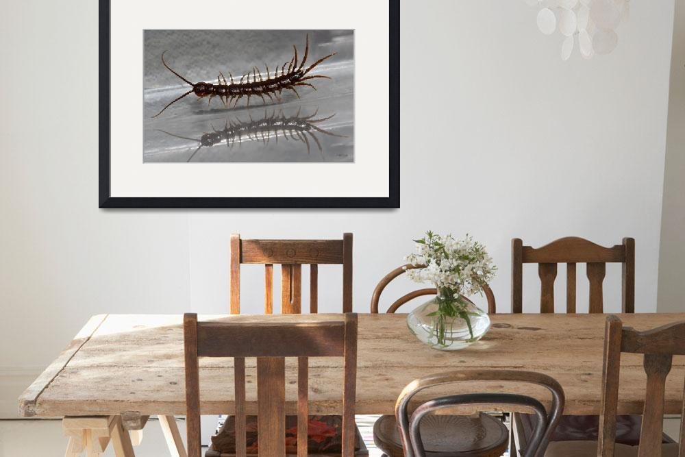 """""""Pacing Centipede with Reflection&quot  (2012) by theblueplanet"""