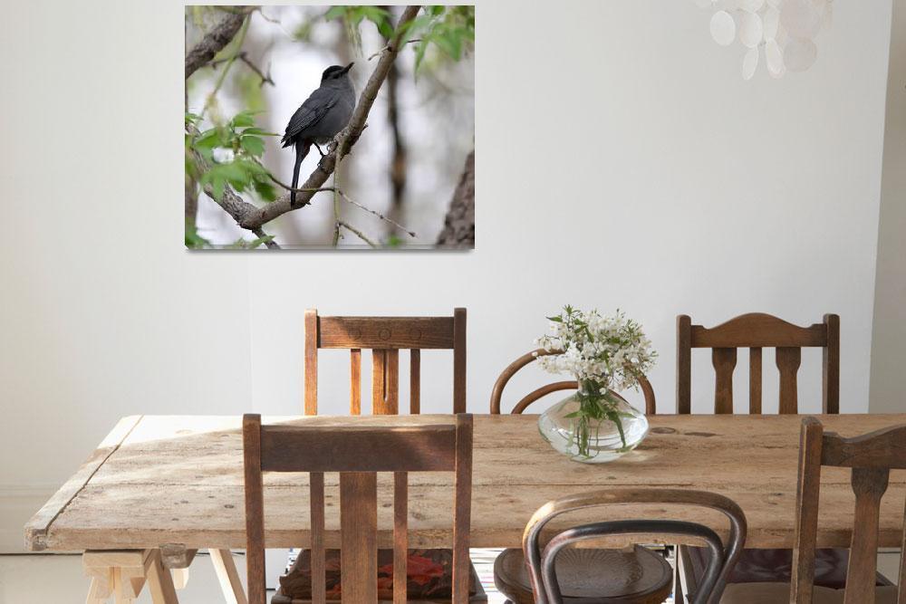 """Gray Catbird""  by cameragal"