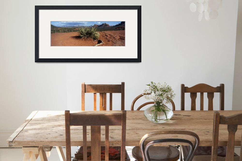 """""""Yucca plant growing in a rocky field&quot  by Panoramic_Images"""