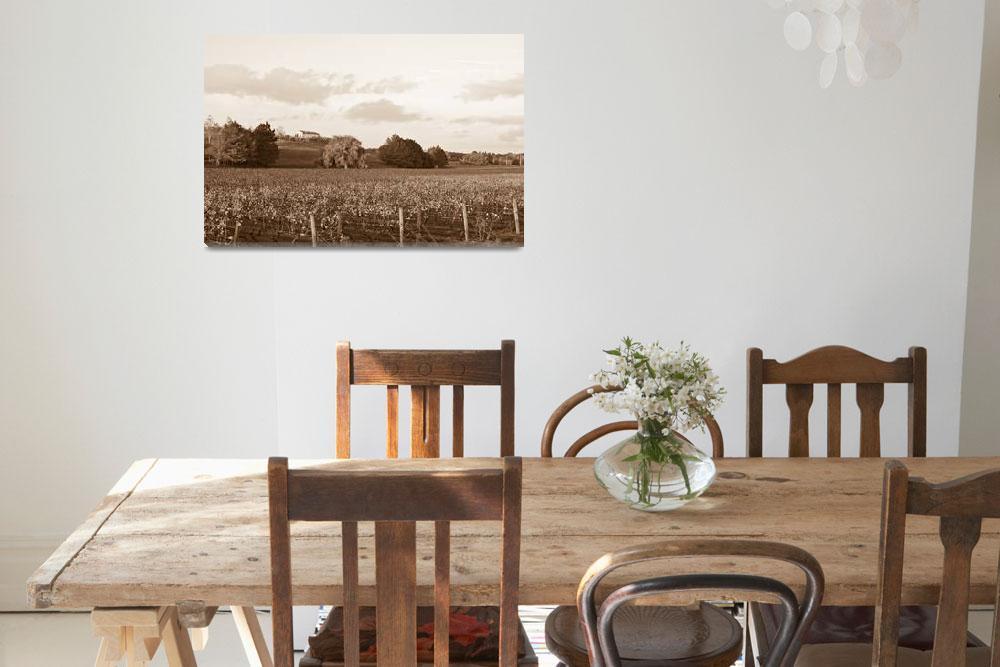 """""""Vineyard""""  (2011) by sardinelly"""
